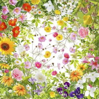 flowersoffukusima.JPG