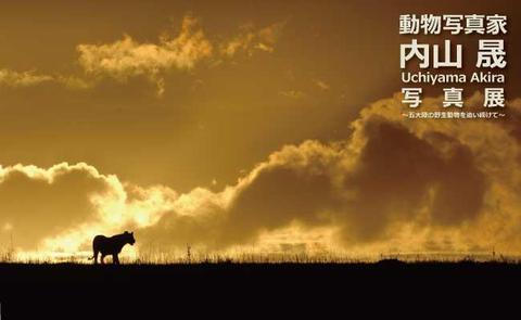 動物写真家・内山 晟写真展~五大陸の野生動物を追い続けて~