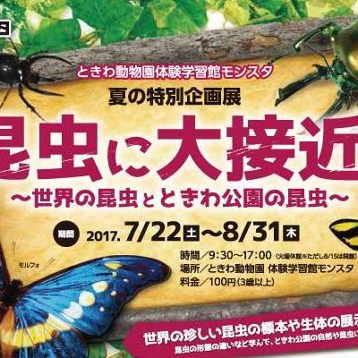 昆虫に大接近~世界の昆虫とときわ公園の昆虫~
