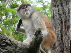 山口大学・動物園・植物館連携企画「地球の歴史と動物の進化」