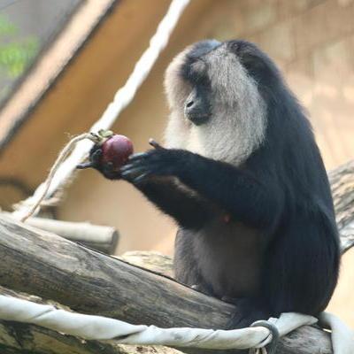 GW特別イベント~動物たちにトロピカルフルーツをあげよう!~