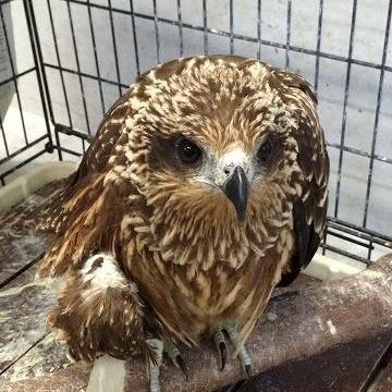 傷病鳥獣保護とは!?~もし傷ついた野生動物に出会ったら?~