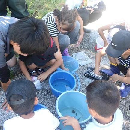 水生生物観察会~常盤湖のいきものを調べてみよう~