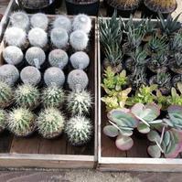 世界を旅する植物館の植物を販売!