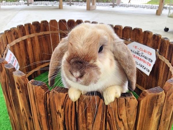 ウサギとモルモットに松ぼっくりツリーをあげよう!