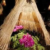 ときわ公園「ぼたん苑」×日本庭園「由志園」『里山の灯り』