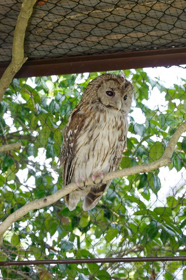傷病鳥獣保護 ときわ動物園の取り組み