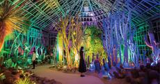 「チームラボ 宇部市ときわ公園 2019 世界を旅する植物館 水の道 光の道」オープニングセレモニー