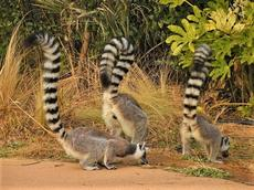マダガスカル生物多様性ミニ展示