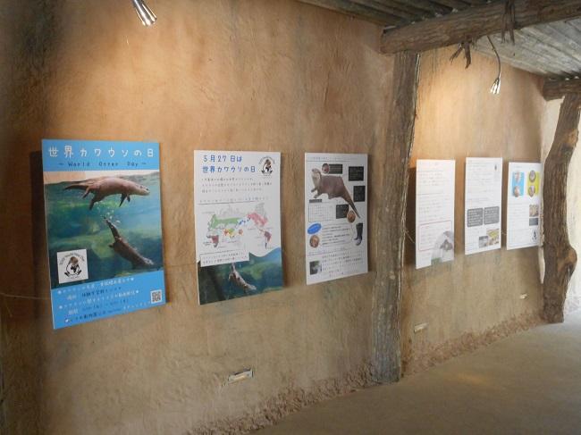 世界カワウソの日パネル展示