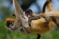 ときわ動物園、宇部市内郵便局コラボ企画 2020年生まれの動物の赤ちゃんに年賀状を送ろう!