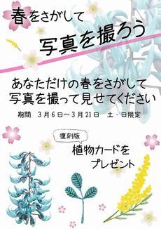 復刻版植物カードがもらえる!土・日限定企画「春をさがして写真を撮ろう」