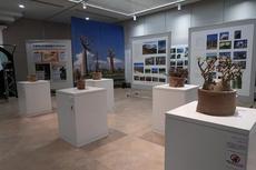 企画展「マダガスカルの不思議展~ビザールプランツの島~」植物の展示も始まりました!