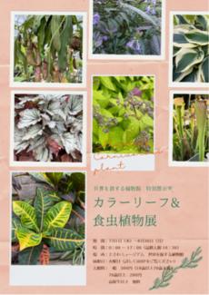 カラーリーフ&食虫植物展