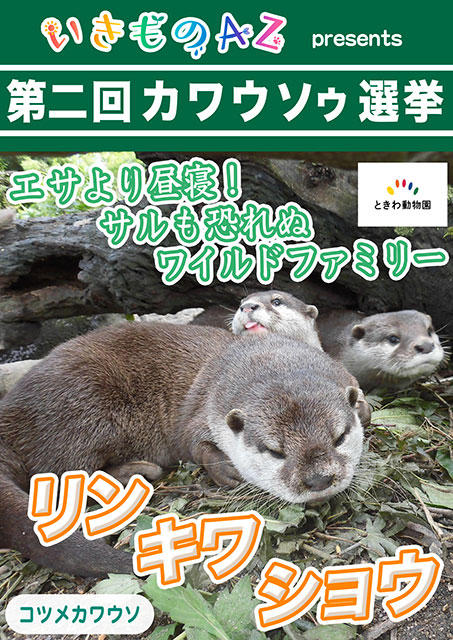 045_ときわ動物園の3頭_宇部市ときわ動物園1
