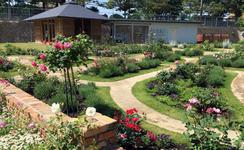 バラと宿根草のガーデン