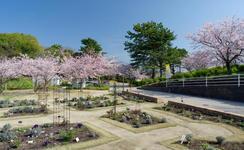 ガーデンとサクラドーム