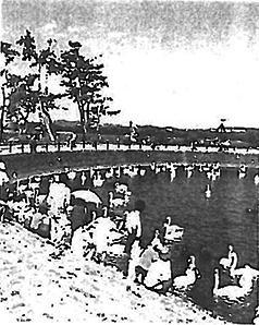 白鳥湖の写真