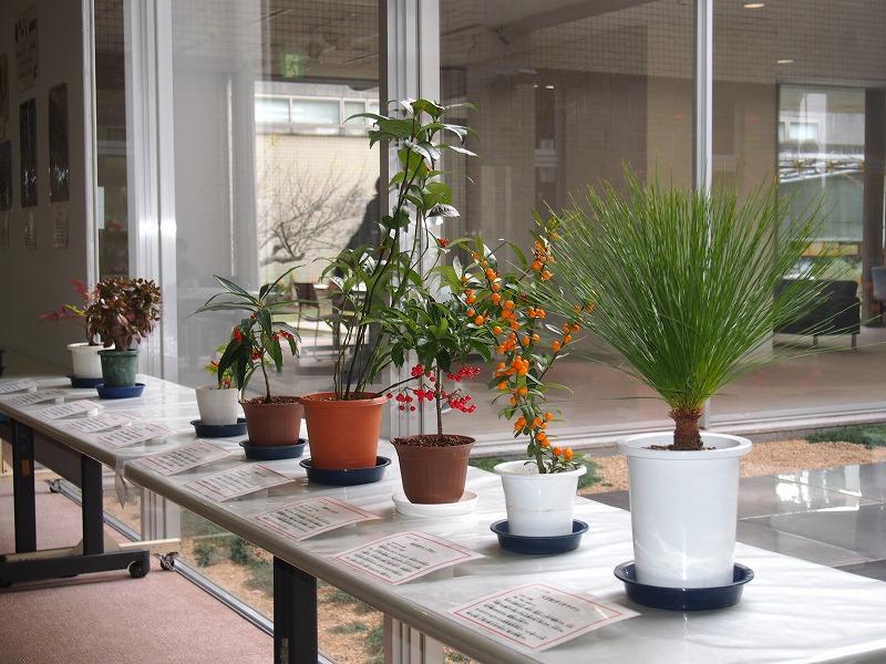 めでたい植物展.jpg