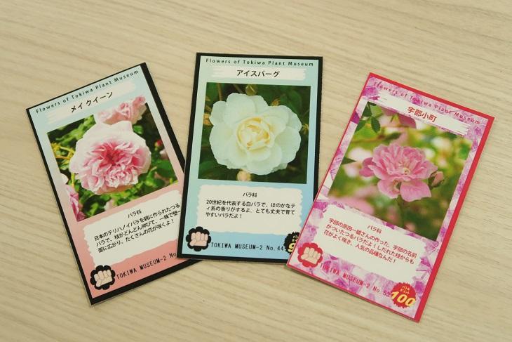 5kokuchi.jpg
