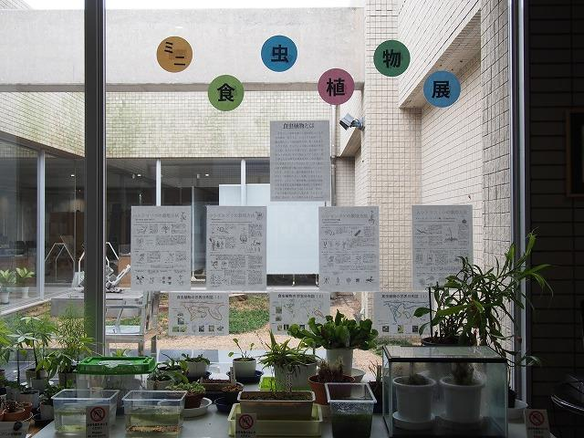 ミニ食虫植物展.jpg