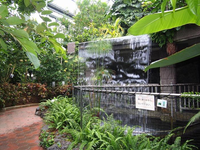熱帯植物室のパピルス.jpg
