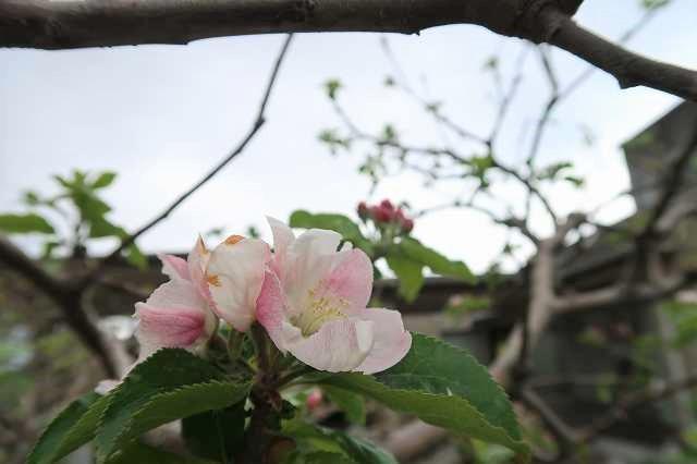 s-ニュートンのリンゴ (10).jpg