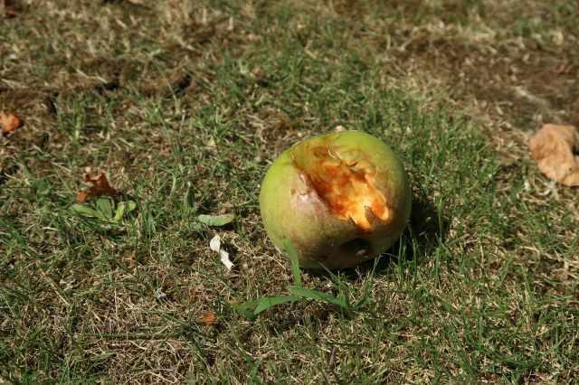s_ニュートンのリンゴ (5).jpg