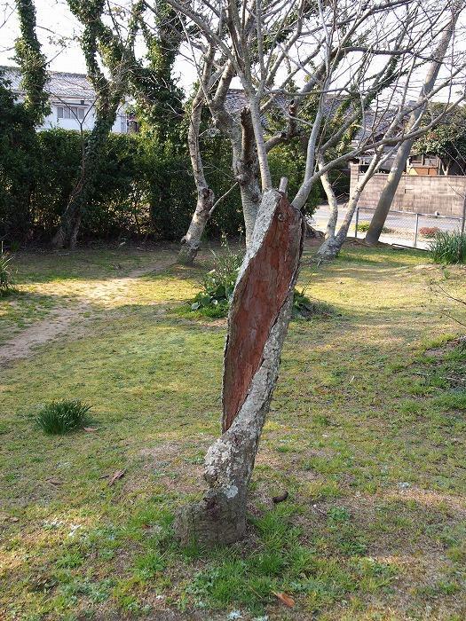 根性のある木.jpg