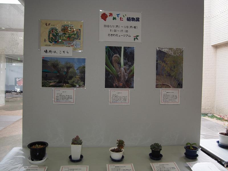 めでたい植物展 (2).jpg