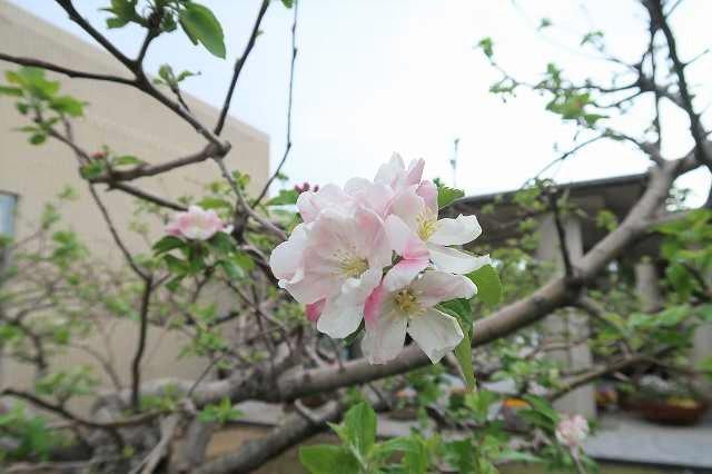 s-ニュートンのリンゴ (8).jpg