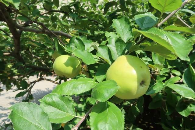 s_ニュートンのリンゴ (3).jpg