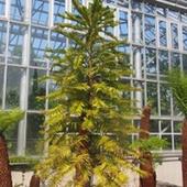 ジュラシックツリー
