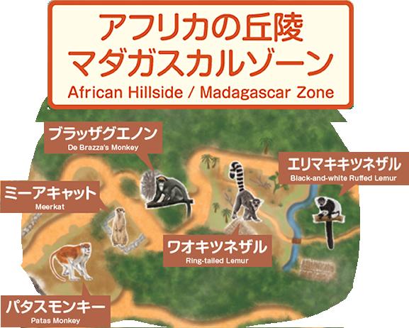 アフリカの丘隆 マダガスカルゾーン