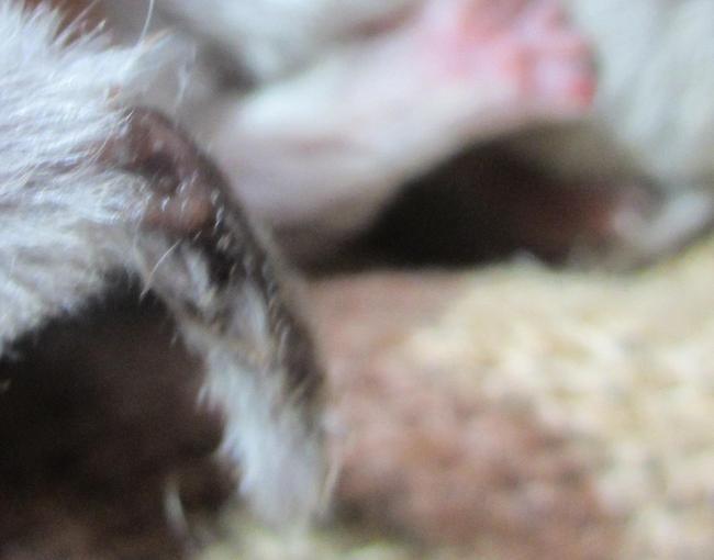 12月3日 コツメカワウソの赤ちゃん成長記録①