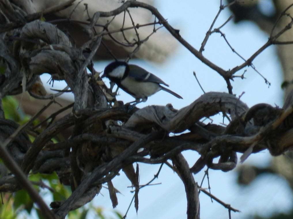 1月22日 野鳥観察会と巣箱づくり