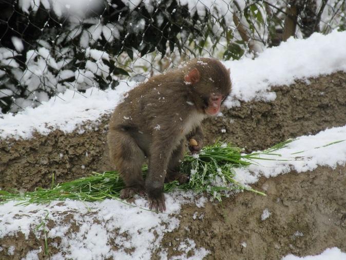 2月11日 飼育員の考えごと。