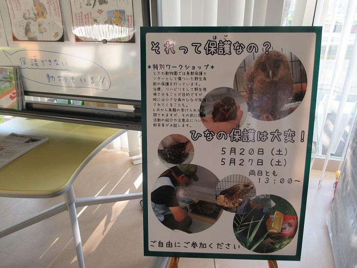 5月24日 傷病鳥獣保護レポート・お知らせ!!