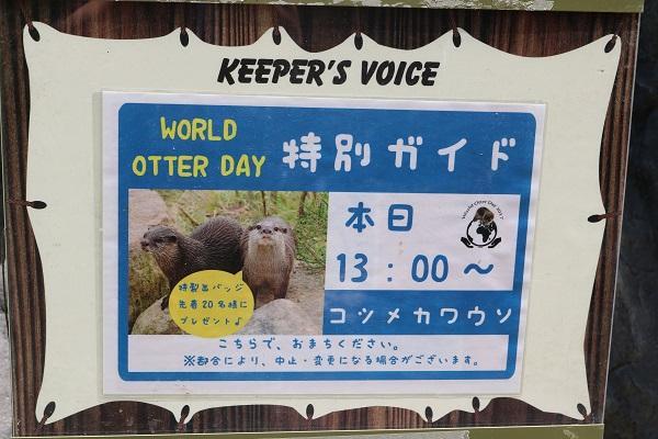 6月6日 World Otter Dayガイドやりました!