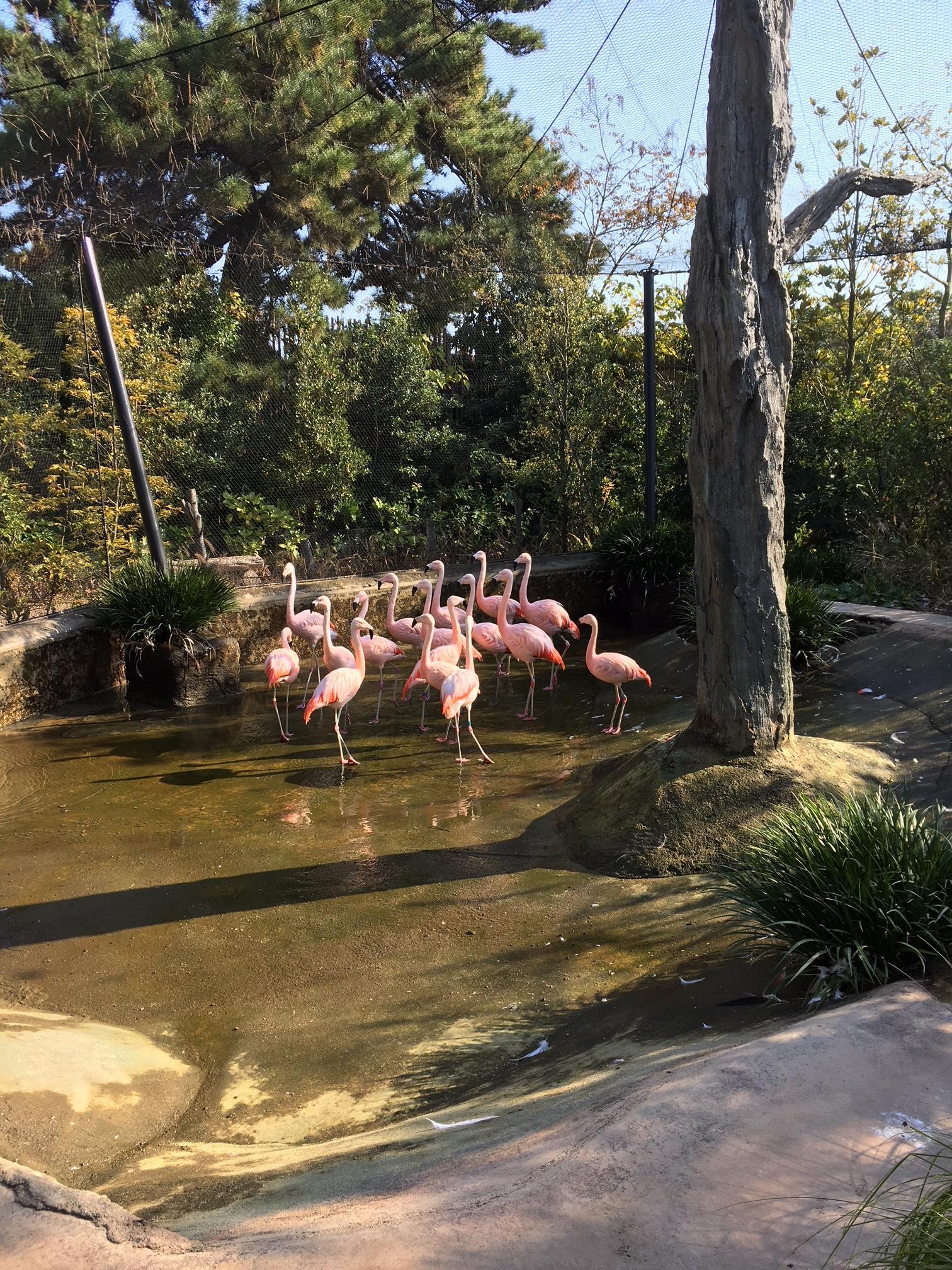 11月27日 からっぽの池