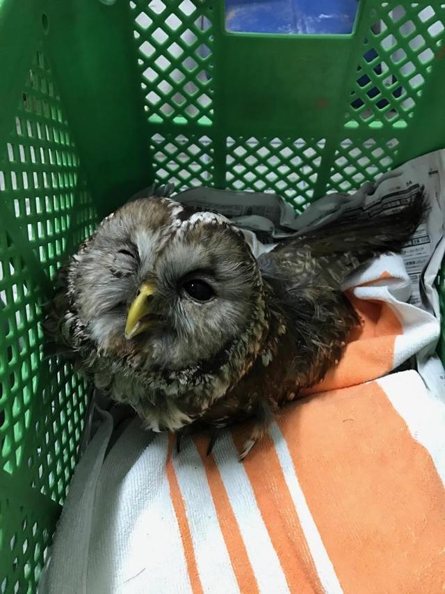 5月20日 傷病鳥獣保護レポート