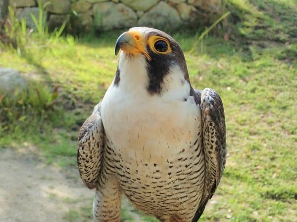 9月19日 傷病鳥獣保護レポート