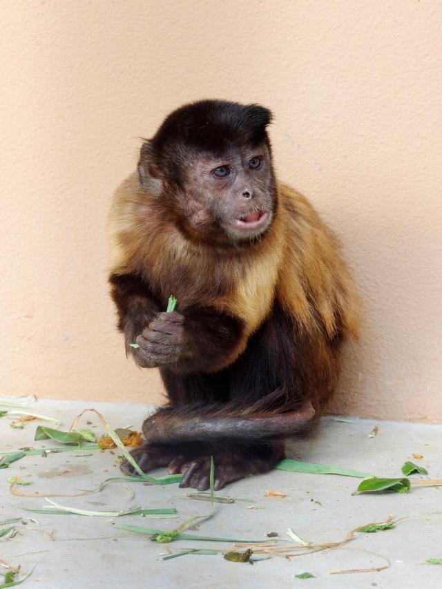3月25日 フサオマキザルのマキちゃんが亡くなりました