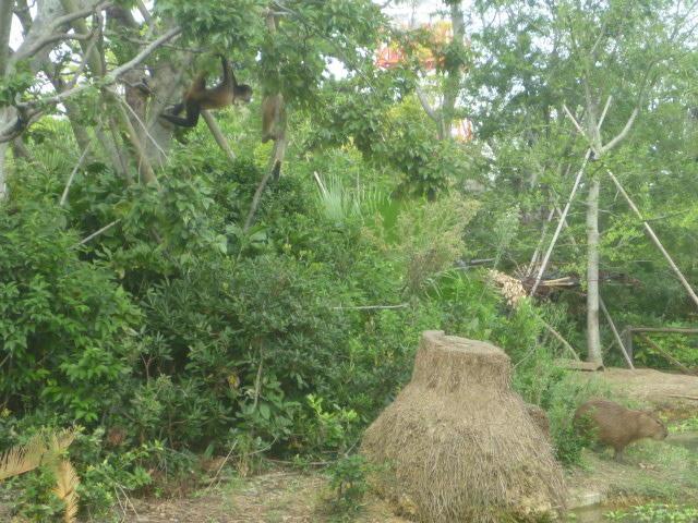 クモザルの島.JPG