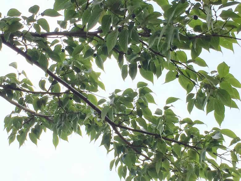 サルたちの上空には、木の枝が伸びています。