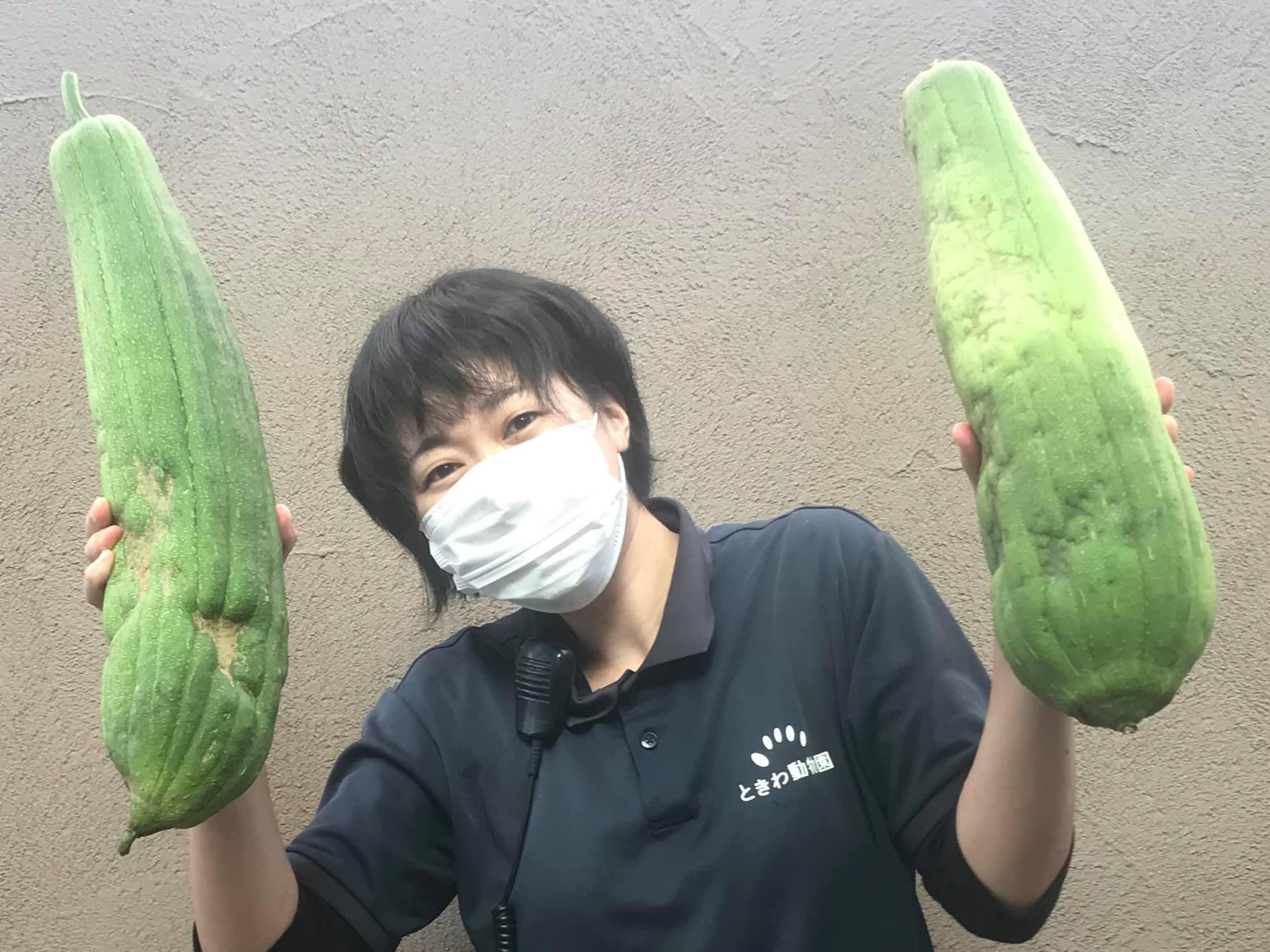 へちま収穫.jpg