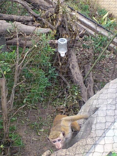 トクモンキー天面を猿通過.jpg