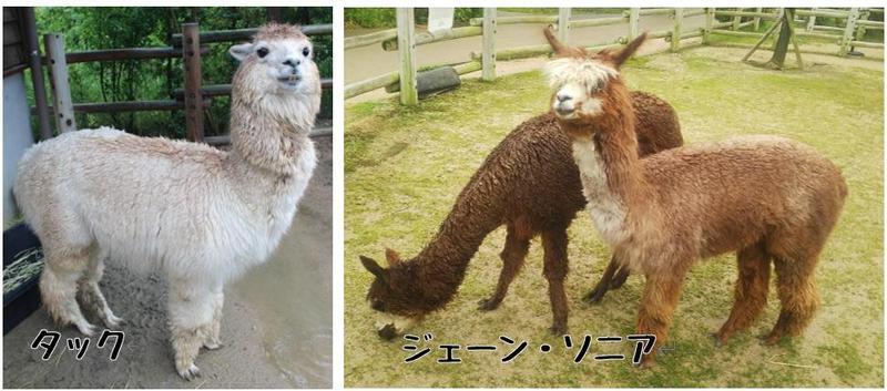 毛刈り Before.jpg
