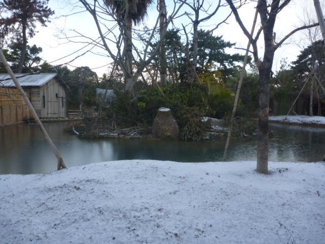 雪クモザル島.JPG
