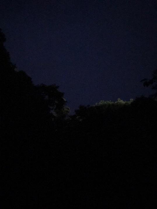 夜の森.jpg